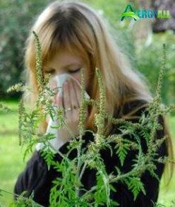 Данная аллергия - это сезонное явление