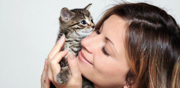 Аллергия на кошачью шерсть и лечение