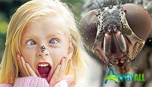 Укусы насекомых вызывают аллергию очень часто