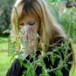 Особенности проявления аллергии к амброзии. Способы борьбы